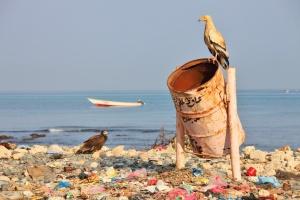 Un continent de déchets